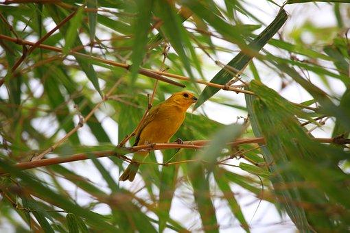 Canary, Nature, Paradise, Island, Animals, Wild, Cute