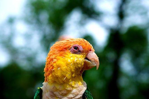 Sun Parakeet, Parrot, Colourful, Yellow, Feather