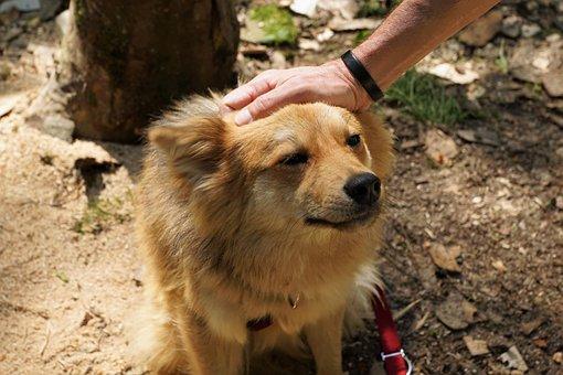 Dog, Pet, Hand, Trust, Young, Rischko, Joy, Good