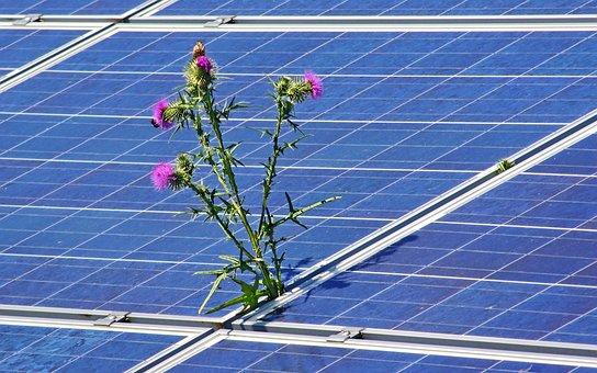 Photovoltaic, Solar Photovoltaic, Solar, Energy