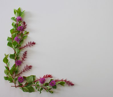 Klee, Clover Flower, Flowers, Summer, Nature, Blossom