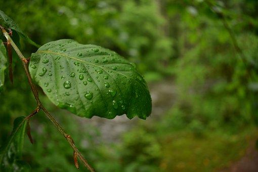 Nature, Letter, Green, Summer, Season, Natural, Garden
