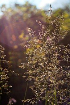 Summer, Sun, The Sun's Rays, Backlight, Nature, Evening