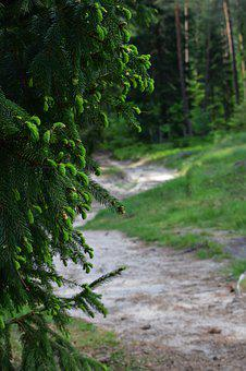 Forest, Trip, Trees, Nature, Path, Outdoors, Forests