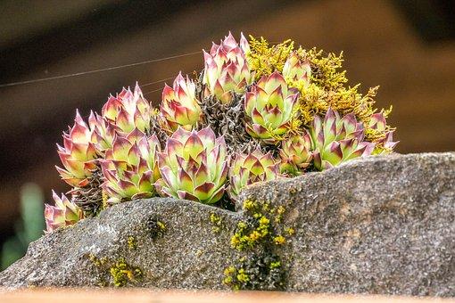 Moss, Blossom, Bloom, Austria, Nature, Beautiful
