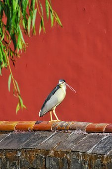 Bird, Red, Animal, Feather, Natural, Palace Wall