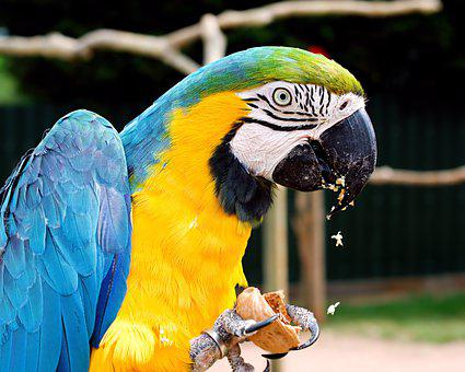 Macaw, Blue And Yellow, Parrot, Colourful, Blue, Colour