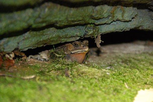 Cologne Zoo, Amphibians, Toad, Tropical House