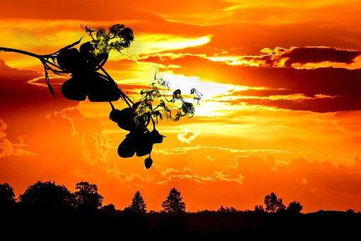 Butterfly, Sunset, Smoke, Silhouette, Evening, Dusk