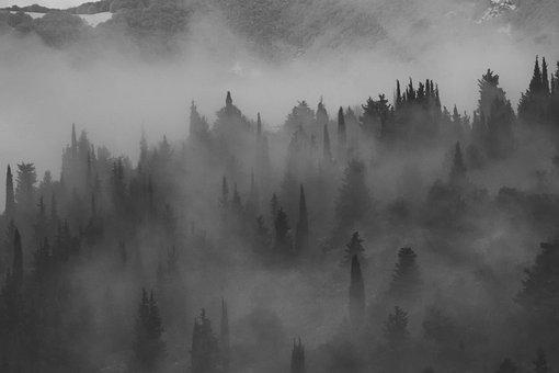 Fog, Foggy, Hills, Landscape, Forest, Trees, Mist, Haze