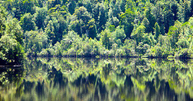 Tasmania, Forest, Reflection, Nature, Trees, River