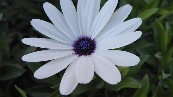White, Flower, Garden, School, Purple