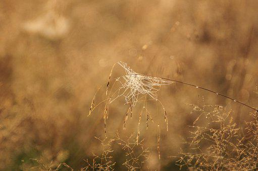 Nature, Grass, Morning, Cobweb, Rosa, Meadow, Field