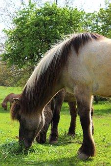 Horse, Pasture, Graze, Mare, Pony, Animal, Nature