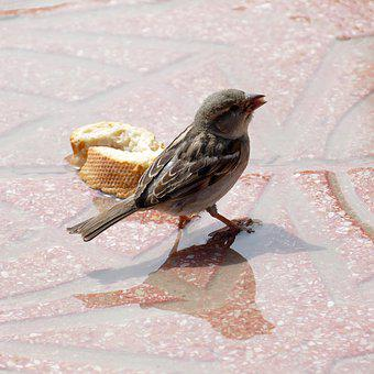 Mus, Homester, Bird, Fauna, Bread, French Bread, Water