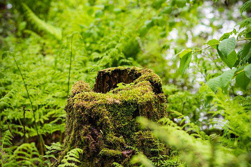 Tree, Stump, Nature, Green, Trunk, Log, Moss, Forest