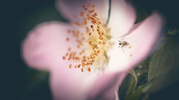 Insect, Nature, Animal, Desert Locust, Leaf, Plants