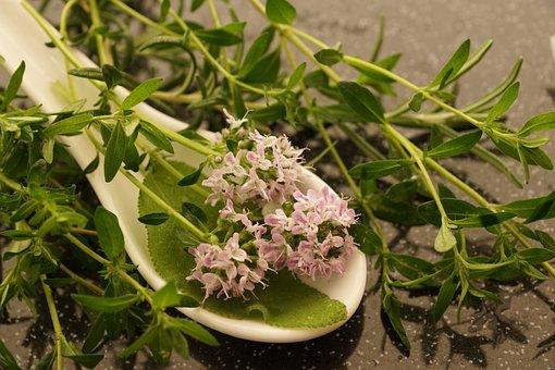 Thyme, Summer, Herb, Nature, Garden, Plant, Blossom