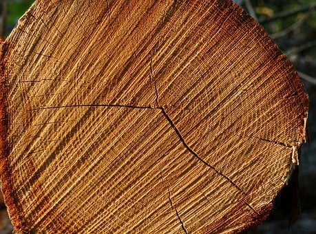 Tree, Tree Ring, Tree Rings, Wood, Nature, Structure