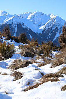 Snow, Mountains, Winter, Tussocks, Grasses, Nature