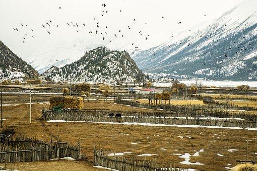 Farm, Residual Snow, Crow, Cow, Scenery
