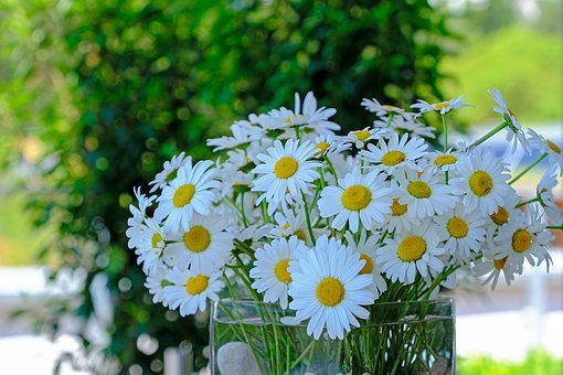 Daisies, Flowers, Wildflowers, Nature, Bouquet