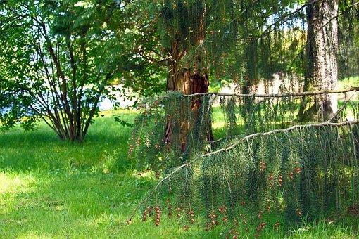 Arboretum, Park, Nature, Landscape, Forest, Flora