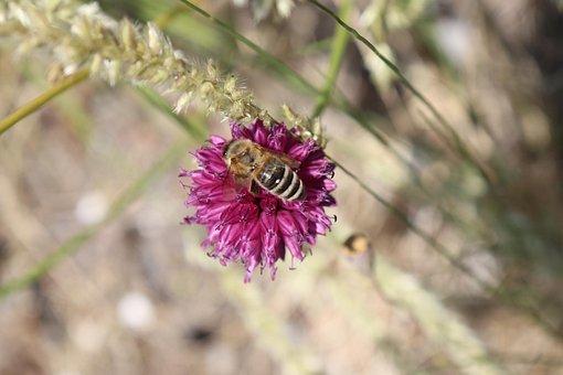 Field, Herbs, Stem, Pink, Green, Flower, Light