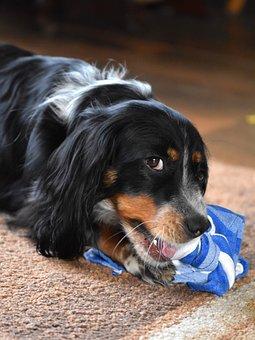 Dog, Hybrid, Pet, Animal, Portrait, Play