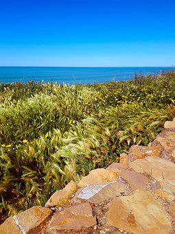 Easter Monday, Mimosa, The First Of May, Sea, Landscape