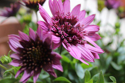 Summer, Flower, Flowers, Nature, Close, Spring, Bloom