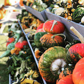 Pumpkin, Farm, Autumn, Gourd, Squash, Orange, Harvest
