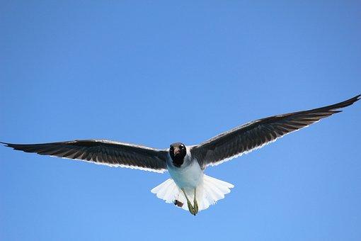 Sea, Seagull, Flight, Sky, Birds, Nature, Wing, Blue