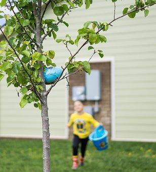 Easter, Kids, Eggs, Basket, Seasonal, Young, Egg, Bunny