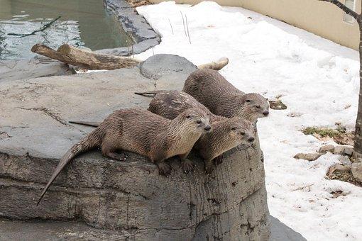 Otter, Wet, Adorable, Fur, Water, Zoo, Animal, Mammal