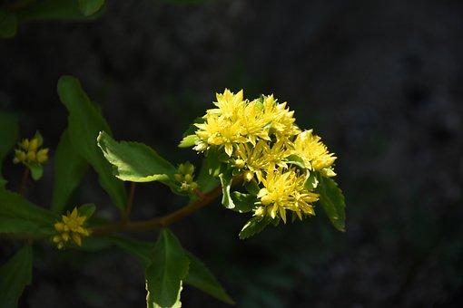 Wildflower, Giraffe First, Yellow Flower, Cuteness