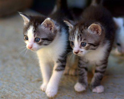 Cat, Small, Cute, Animals, Kitty, Adorable, Tamed
