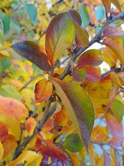 Autumn, Paint, Tree, Park, Background