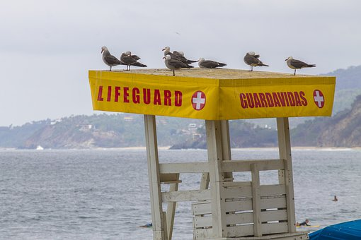 Life Guard, Seagulls, Beach, Sea, Seagull, Nature, Ave