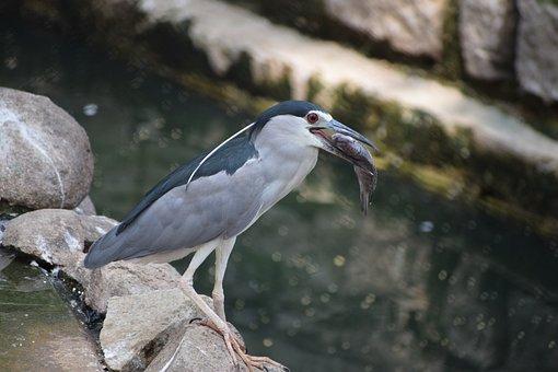 Bannerghatta Biological Park, Fish, Bird, Nature, Water