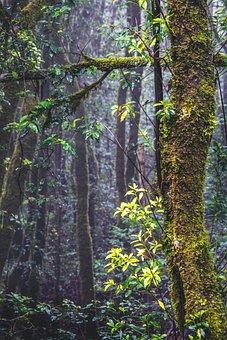 Forest, Tenerife, Nature, Anaga, Landscape, Tree, Away