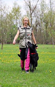 Black, German Shepherd, Dog, Host, Contact, Work, Obey