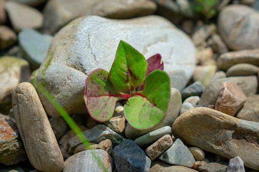 Grass, Green, Germination, Vitality, Stone, Green Leaf