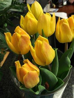 Yellow, Tulips, Flowers, Spring, Happy, Bloom