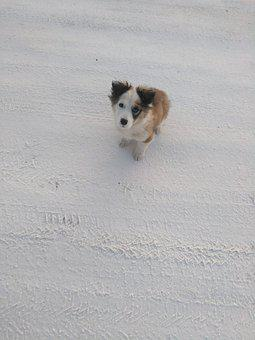 Dog, Winter, Puppy, Snow