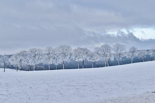 Winter, Frozen, Trees, Row Of Trees, Cold, Snow