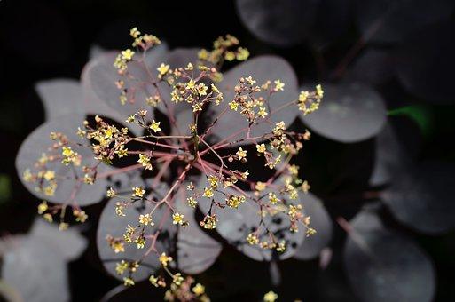 Ornamental Shrub, Flowers, Leaves, Spring, Garden