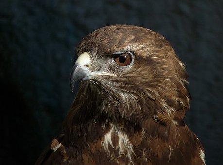 Eagle, Birds, Park, Zoo, Thessaloniki, Animals