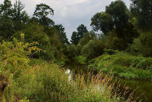 River, Green, Nature, Tree, Water, Landscape, Forest