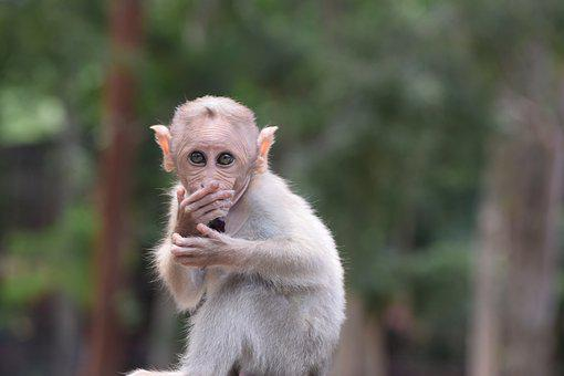 Bannerghatta Biological Park, Animal, Monkey, Zoo